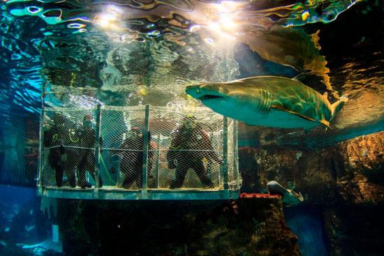 купить билеты в аквариум Барселоны