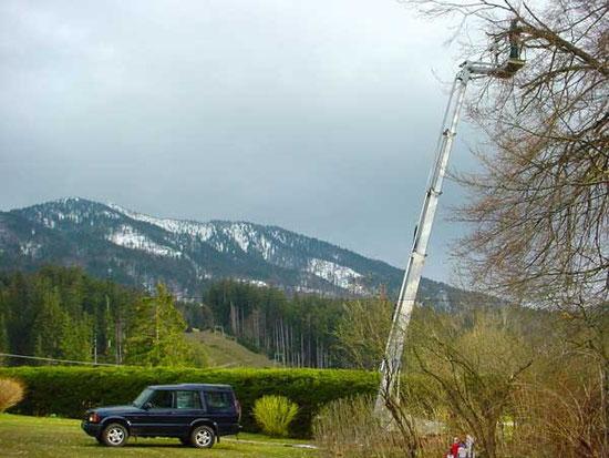 Baum- und Verkehrssicherungskontrollen