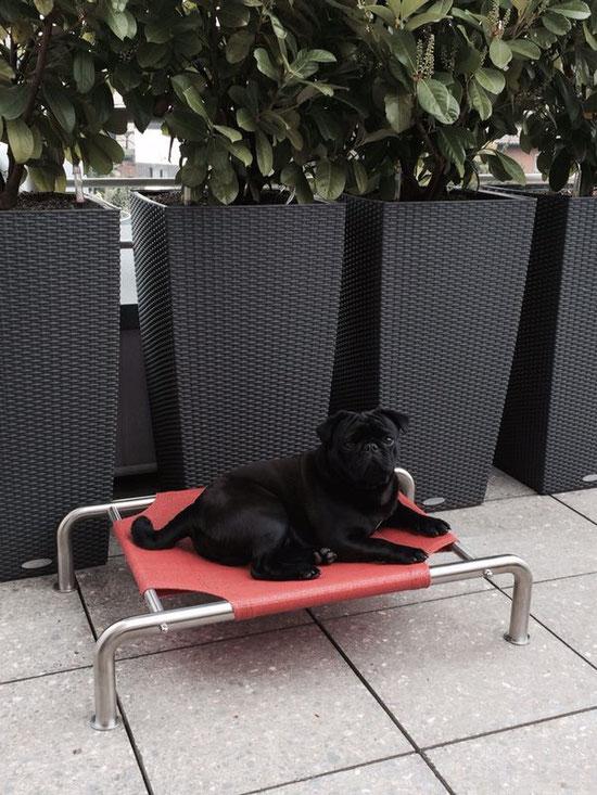 Hundeliege für kleine