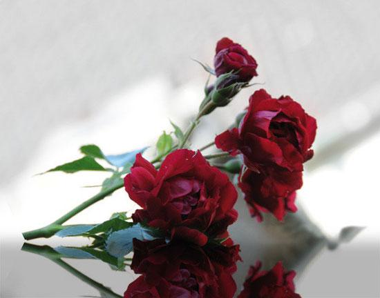 Rosen als Trauermotiv für Trauerkarte