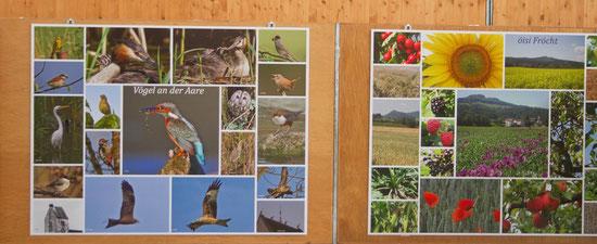 """Auf der Fotowand """"Vögel an der Aare"""" werden meine Vogelbilder neben zwei Fotos von Weissstörchen auf der Veltheimer Kirche (Archivbilder von Thomas Gysel) schön präsentiert."""