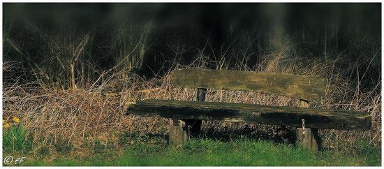 Die alte Waldbank