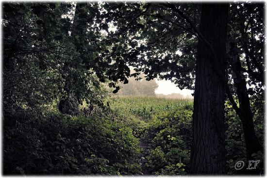 Ein Waldpfad