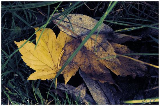 Blättergrab