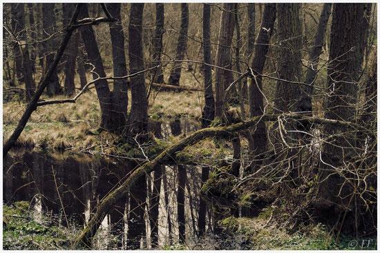 Lebensraum: Feuchtgebiete