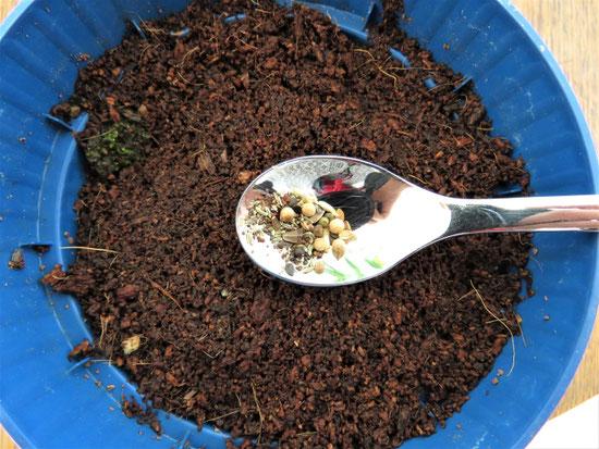 Keimprobe Blumenwiesen-Saatgut
