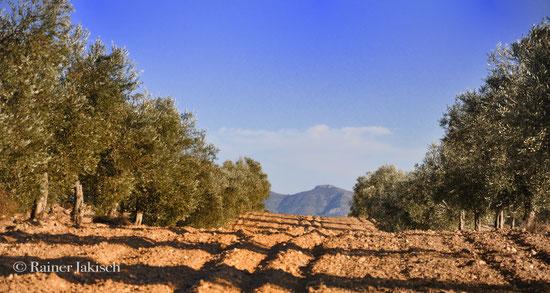 Olivenhain Süden Spanien