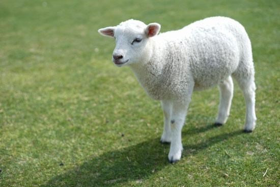 羊の門【キリストの言葉】