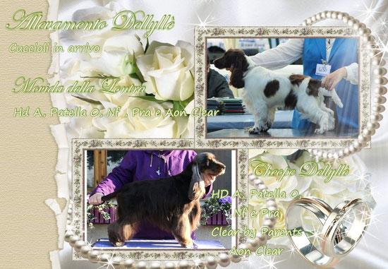 Cuccioli nati il 23-12-2018
