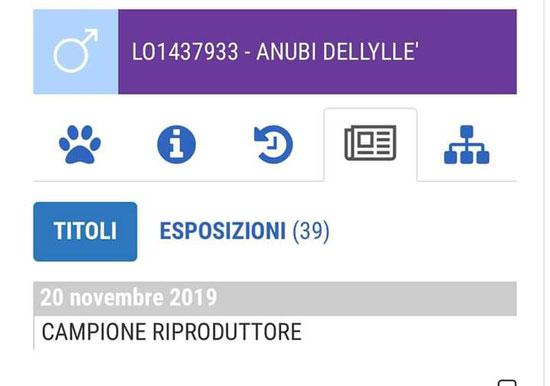Anubi Dellylle' primo e unico campione Italiano Riproduttore in Italia