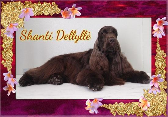 Shanti Dellyllè