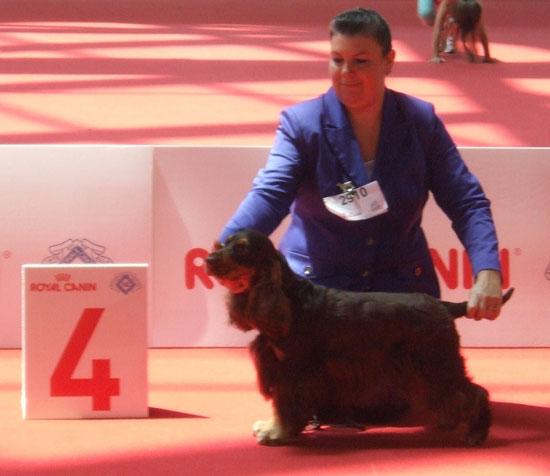 Mondiale di Expò Milano World Dog Show, Giuggiola Dellyllè 4°Eccellente