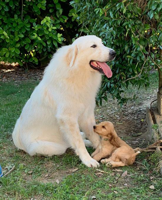 Jolie 12 mesi e un cucciolo di 60 giorni