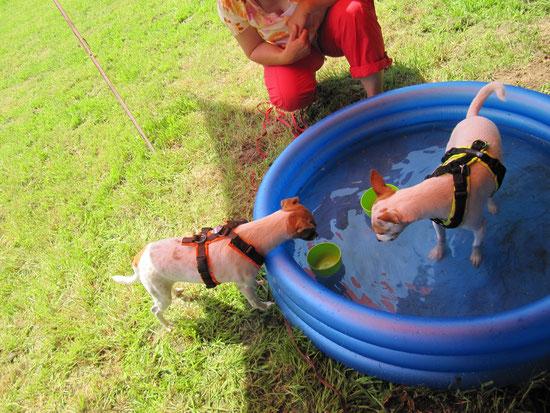 Micky ist mittendrin, während Dia das Wasser nicht gut findet.