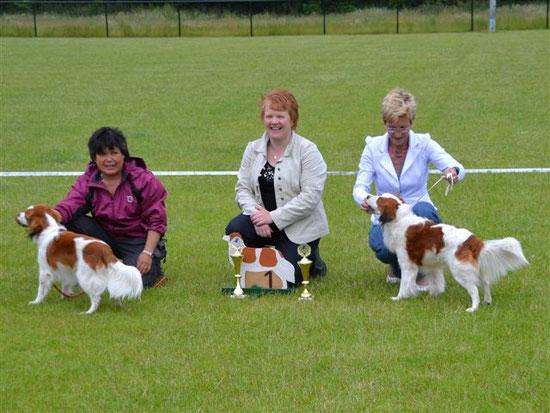Vereniging Het Nederlandse Kooikerhondje  - Jonge hondendag 2013