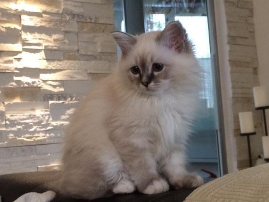 Ylvie wurde nur 6 Monate alt