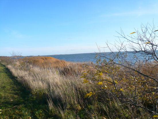 Schilf und Boddenmeer