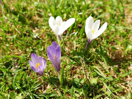 Frühlingswanderung Samerberg Almen