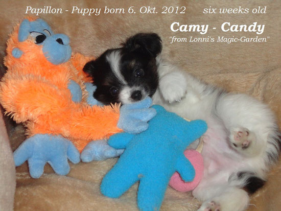 Camy 6 Wochen jung
