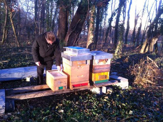 Schlossbienen, Winterbehandlung am 15.12.2013