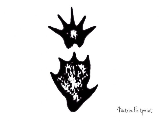 Nutria Footprint