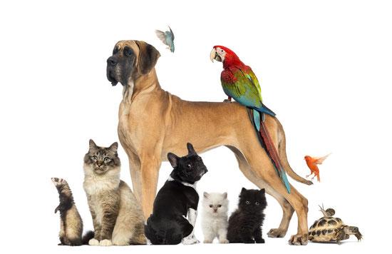 Photos de différents animaux de compagnie
