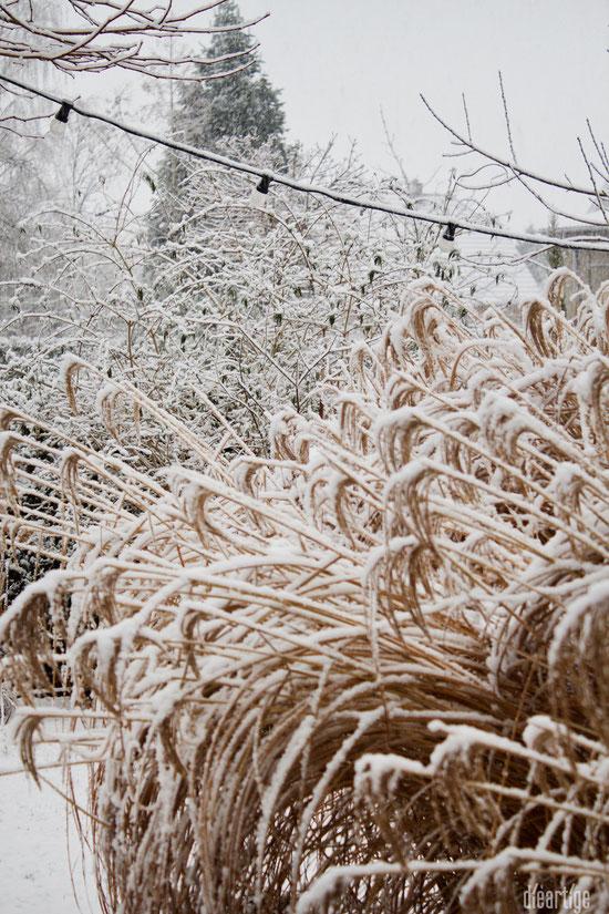dieartigeBLOG - Schnee im Wintergarten, Chinaschilf, Sommerflieder + Lichterkette