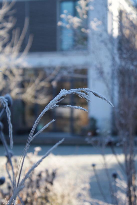 dieartigeBLOG - Wintergarten, Rauhreif + Eiskristalle, Gras