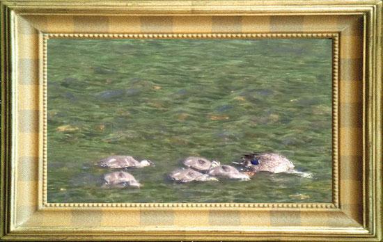 伏見川のカルガモ親子  ↑画像クリックでブログへ
