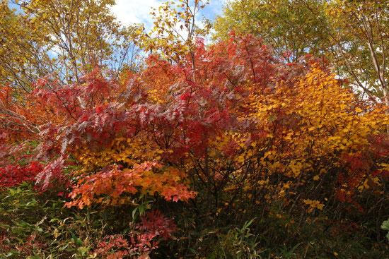 八方尾根の紅葉