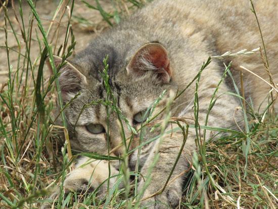 Le chat est un animal domestique, je le protège !