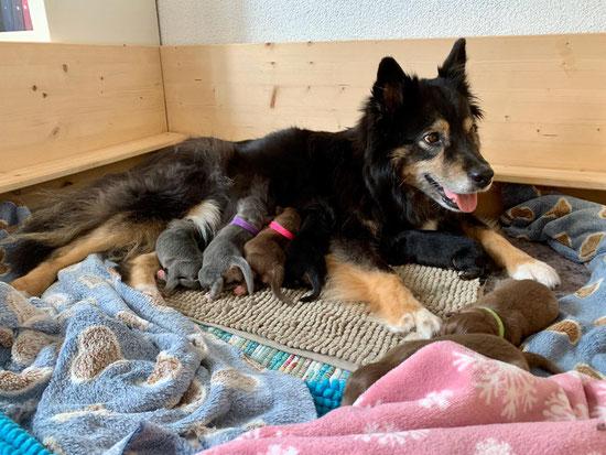 Sukka mit ihren 7 Zwergen (Foto Anne Staub)