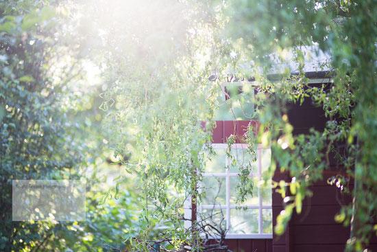 Garten, Garten Hanau, Garten Fotografie Hanau, Gartenblog Hanau, Fotograf Hanau, Fotoshooting Hanau