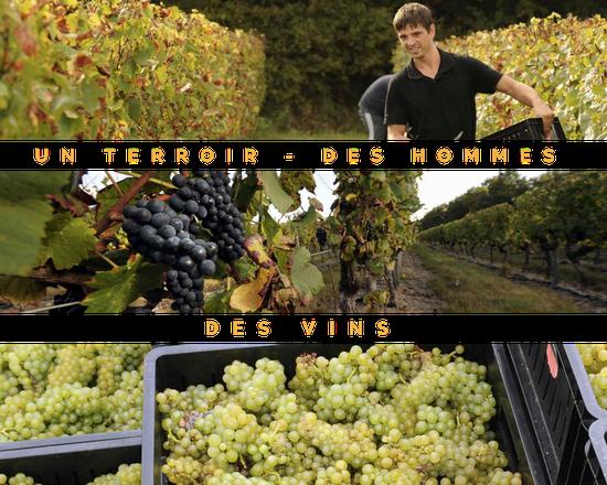 appellation aoc cheverny vin de loire terroir homme viticulture dégustation produits fermiers