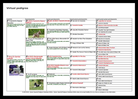 Pedigree virtuale, i cani scritti in rosso sono campioni di bellezza.