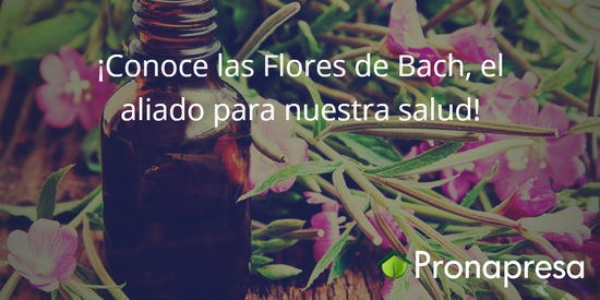 ¡Conoce las Flores de Bach, el aliado para nuestra salud!