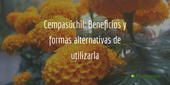 Cempasúchil: beneficios y formas alternativas de utilizarla