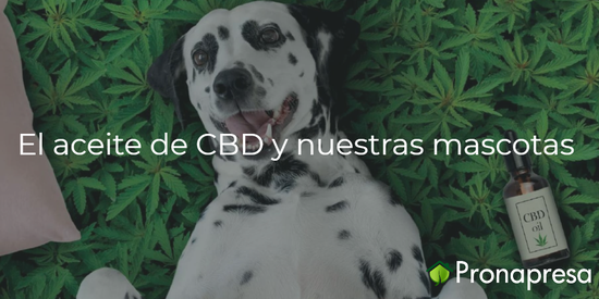 CBD y mascotas