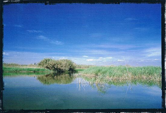 Los humedades del parque natural  del Fondo, son uno de los ecosistemas mas frágiles, Alicante, Comunidad Valenciana.