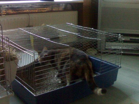 Nach dem säubern werden die Käfige von Sally kontrolliert und dann freigegeben.Hi Hi!