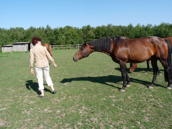 La remise en confiance à pied du cavalier avec le cheval