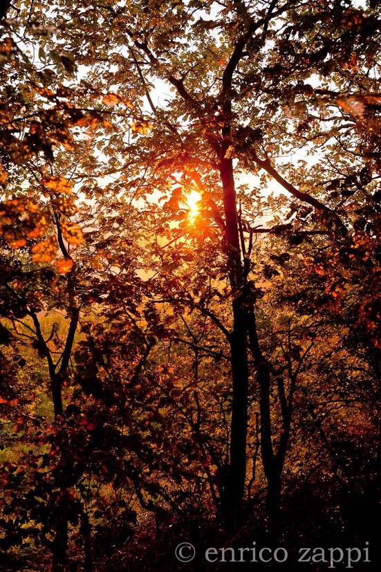 Un tramonto da favola in mezzo al bosco!