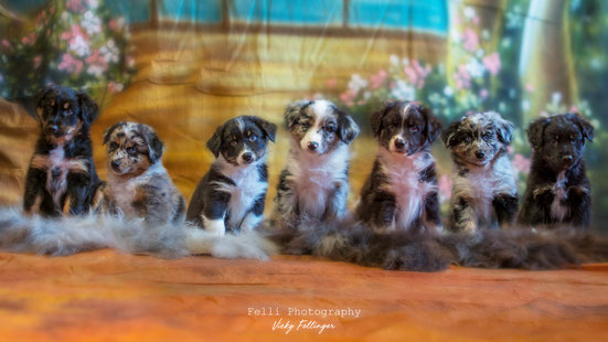 Foto - 1 Woche vor dem Auszug ins neue zu Hause - von links: Coby, Ciwana, Sam, Luna, Charly, Cara, Ciak