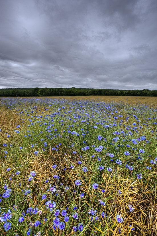 MG6679• Blue field •
