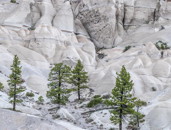 pine park igoplaces.de utah mountains white dixie national forest