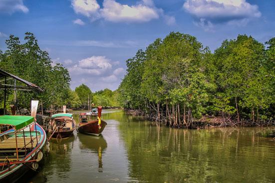 boote-an-mangroven-baeumen