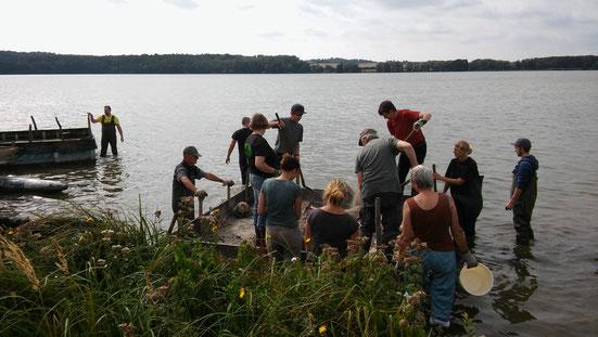 Wie in jedem Jahr, wurden auch in diesem, die Brutinsel für die Flussseeschwalben auf der Lieps gereinigt und anschließend ins Winterlager gebracht.