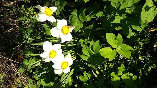 Frühling, Osterzeit