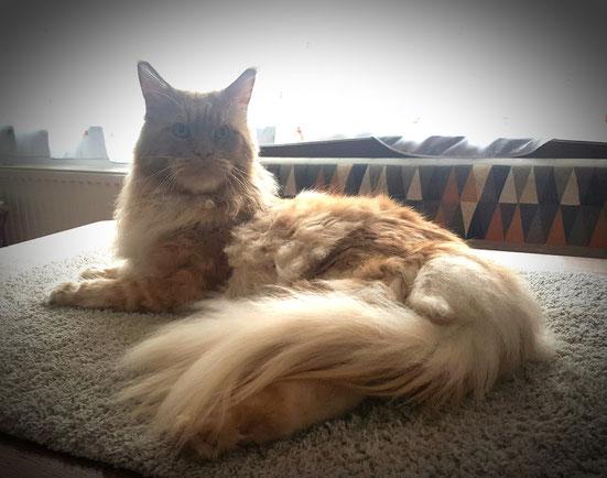unser Platz wo ich meine Katze Kämme in einer angenehmen höhe auf den Tisch