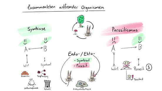 Tafelbild welches die ökologischen Beziehungen in parasitischen und symbiontischen Beziehungen visualisiert.